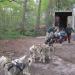 sortie en chiens de traineaux 18/05/2017
