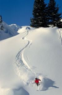 ski_collet.jpg