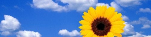 cropped-printemps-fond-ecran-fleurs-tournesol-ciel-bleu.jpg